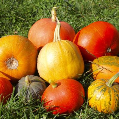 fall squashes